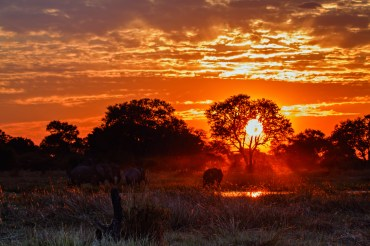 Botswana Elephants at sunset