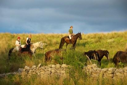 The local herd