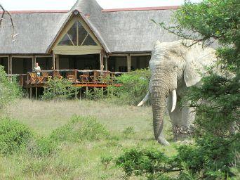 Bush Lodge, Amakhala Reserve