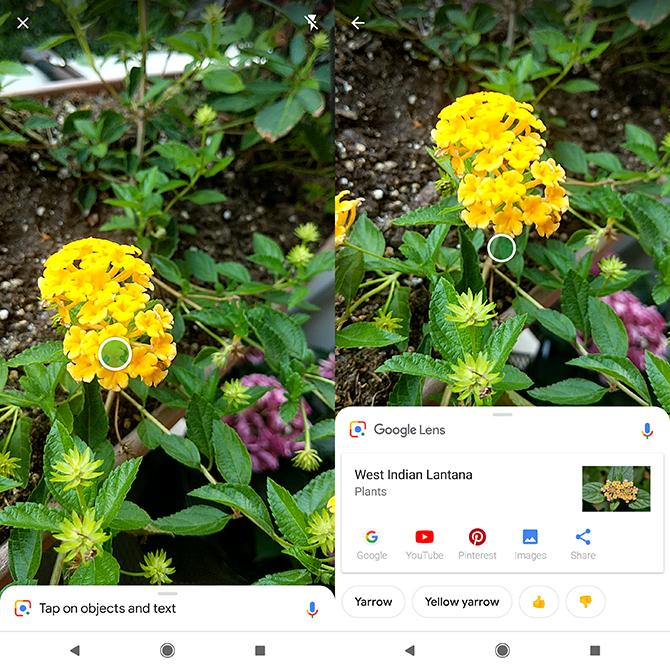 So identifizieren Sie Pflanzen und Blumen mit der Kamera Ihres Telefons Google Lens