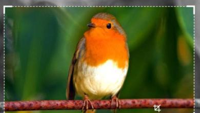 Photo of 10 outils gratuits d'images en ligne pour redimensionner, convertir et optimiser