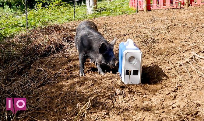 EB240 à l'extérieur avec des cochons