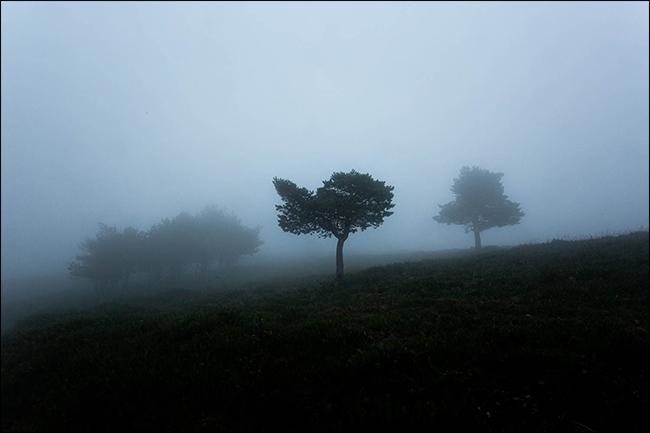 Un plan sombre d'arbres dans le brouillard.