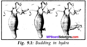 MP Board Class 8th Science Solutions Chapter 9 Reproduction in Animals 1