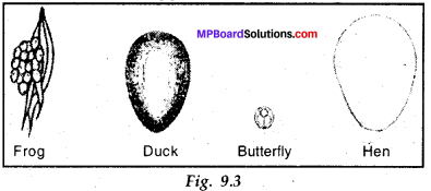 MP Board Class 8th Science Solutions Chapter 9 Reproduction in Animals 5