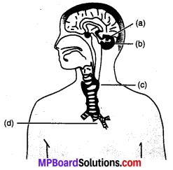 MP Board Class 10th Science Solutions Chapter 7 नियंत्रण एवं समन्वय 5