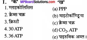 MP Board Class 11th Biology Solutions Chapter 17 श्वसन और गैसों का विनिमय - 1