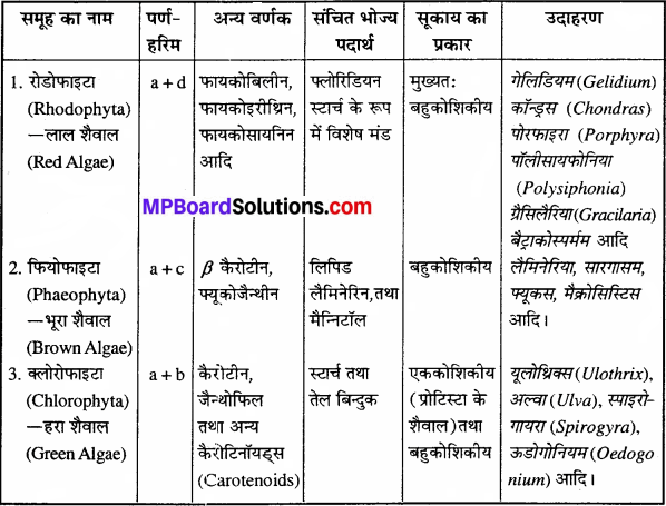 MP Board Class 11th Biology Solutions Chapter 3 वनस्पति जगत - 1