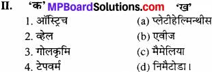 MP Board Class 11th Biology Solutions Chapter 4 प्राणि जगत - 3
