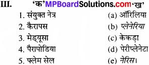 MP Board Class 11th Biology Solutions Chapter 4 प्राणि जगत - 4