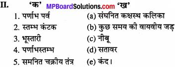 MP Board Class 11th Biology Solutions Chapter 5 पुष्पी पादपों की आकारिकी - 23