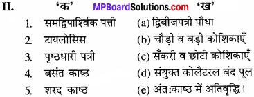 MP Board Class 11th Biology Solutions Chapter 6 पुष्पी पादपों का शारीर - 15