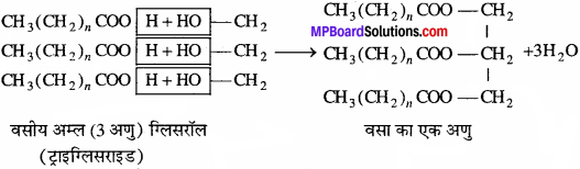 MP Board Class 11th Biology Solutions Chapter 9 जैव अणु - 12