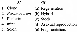MP Board Class 12th Biology Important Questions Chapter 1 Reproduction in Organisms 2