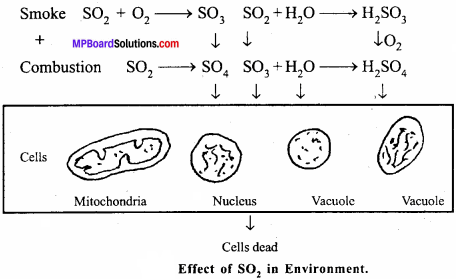 MP Board Class 12th Biology Important Questions Chapter 16 Environmental Issues 3