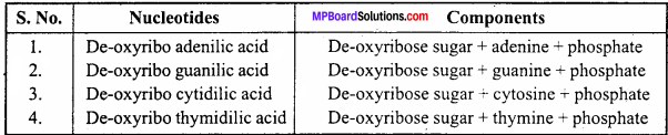MP Board Class 12th Biology Important Questions Chapter 6 Molecular Basis of Inheritance 4