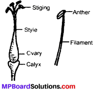 MP Board Class 6th Science Solutions Chapter 7 Getting to Know Plants img 8