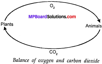MP Board Class 7th Science Solutions Chapter 17 Forests Our Lifeline img 1