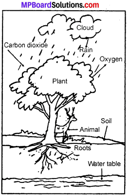 MP Board Class 7th Science Solutions Chapter 17 Forests Our Lifeline img 2