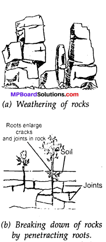MP Board Class 7th Science Solutions Chapter 9 Soil img-12