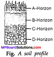 MP Board Class 7th Science Solutions Chapter 9 Soil img-7