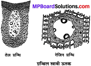 MP Board Class 9th Science Solutions Chapter 6 ऊतक image 15