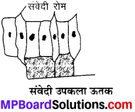 MP Board Class 9th Science Solutions Chapter 6 ऊतक image 34