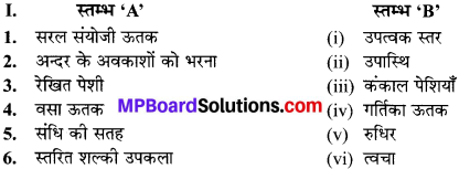 MP Board Class 9th Science Solutions Chapter 6 ऊतक image 8