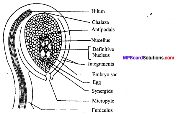 MP Board Class 12th Biology Solutions Chapter 2 Sexual