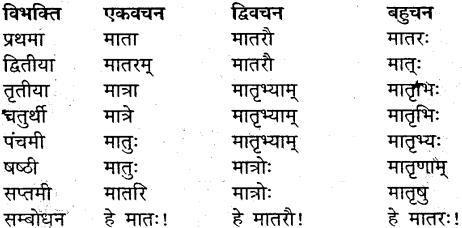 MP Board Class 9th Sanskrit व्याकरण शब्द रूप img-18