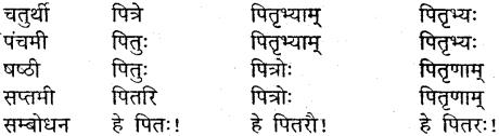 MP Board Class 9th Sanskrit व्याकरण शब्द रूप img-7