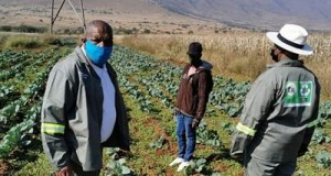 Mpumalanga provincial government Member of the Executive Council (MEC) for Agriculture, Rural Development, Land and Environmental Affairs, Vusi Shongwe on blue mask with members of the Sterksdorp Small Holder Farmers Enterprise Programme (SHEP). Photo, Anna Ntabane, Mpumalanga Guardian