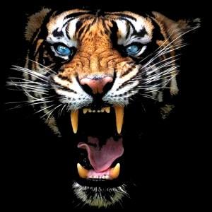Τίγρης Ψηφιακή Εκτύπωση Best Seller