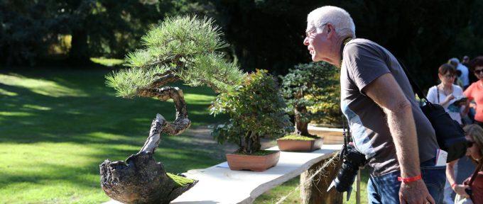 Mulhouse, capitale mondiale du bonsaï