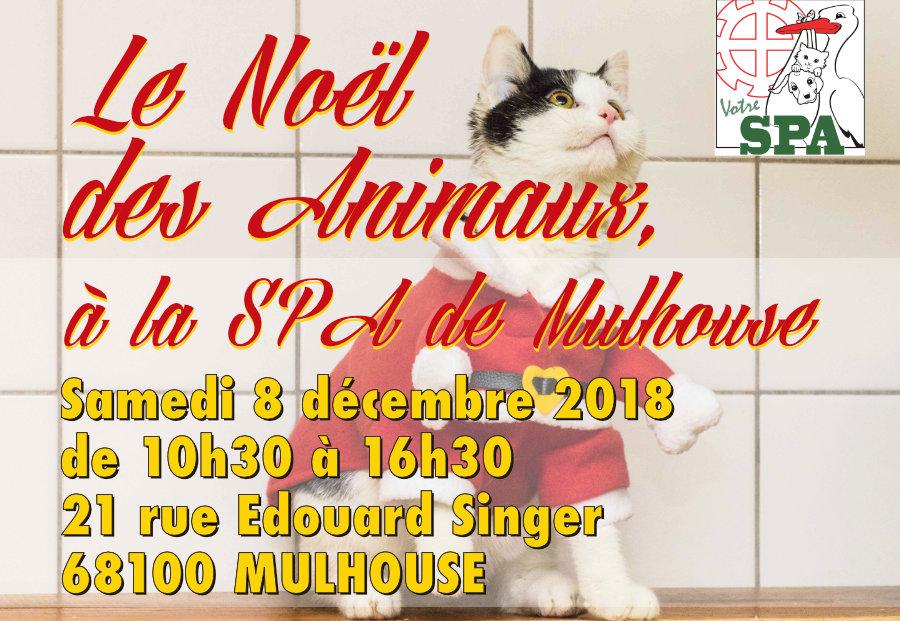 Noël des animaux à la SPA