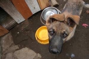 Jak karmić psa