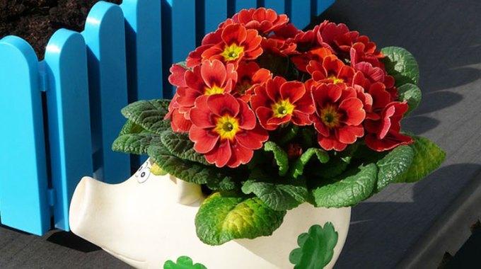 kwiaty-podczas-urlopu