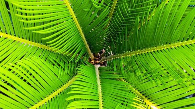 jak-dbac-o-palme-kokosowa