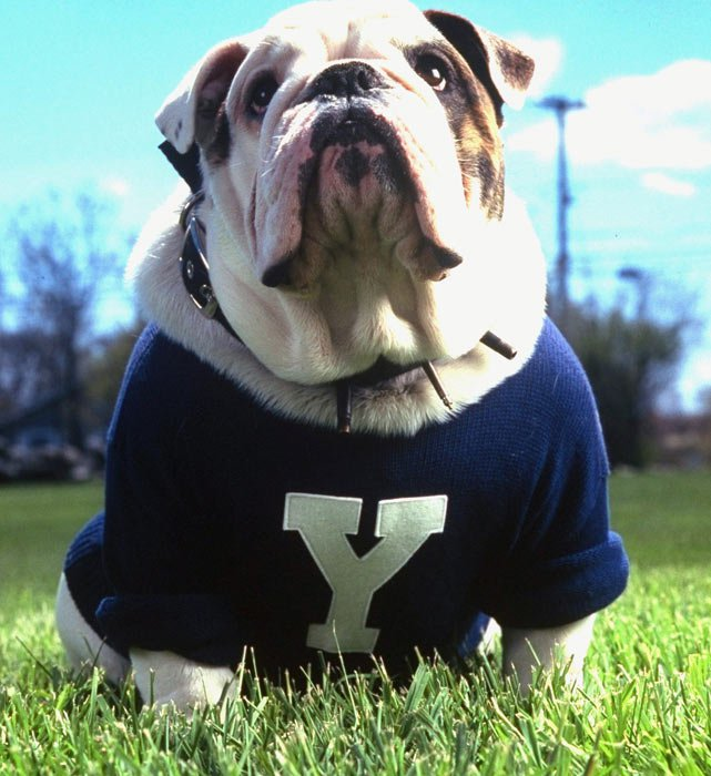 Jefferson Elementary  Yale Bulldogs