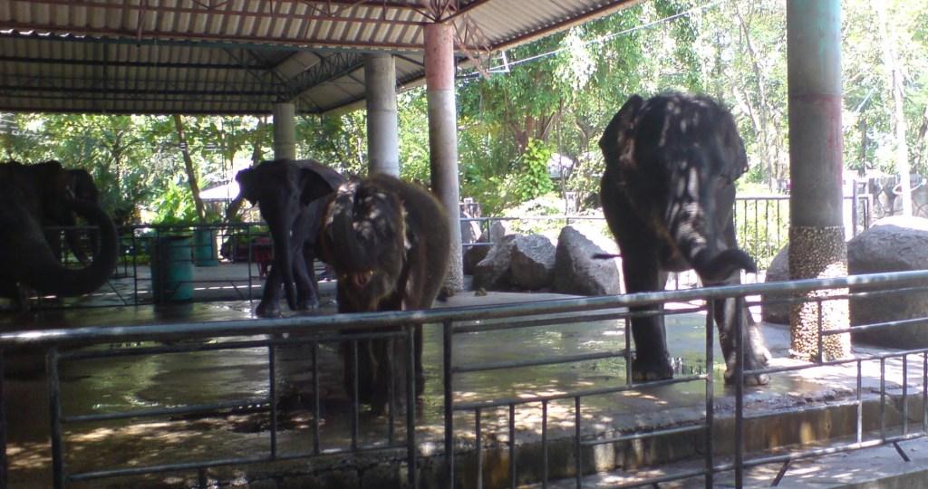 Phuket Zoo 2006
