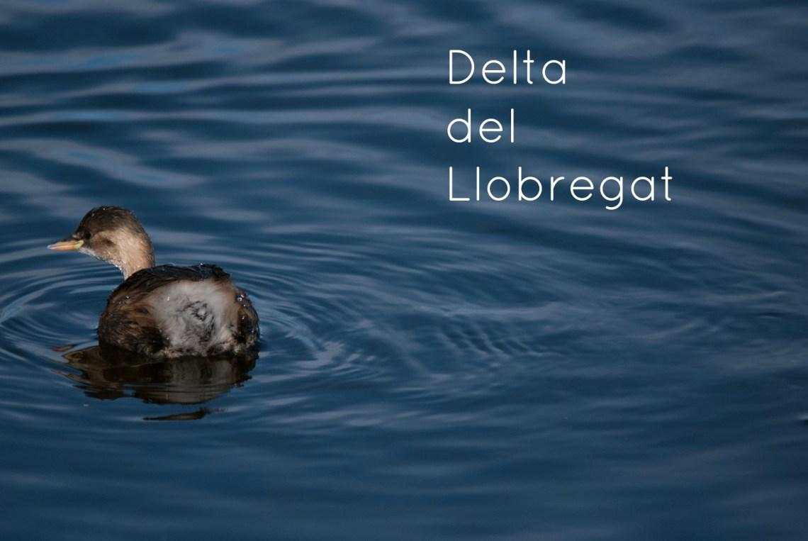 delta-del-llobregat-b-9l