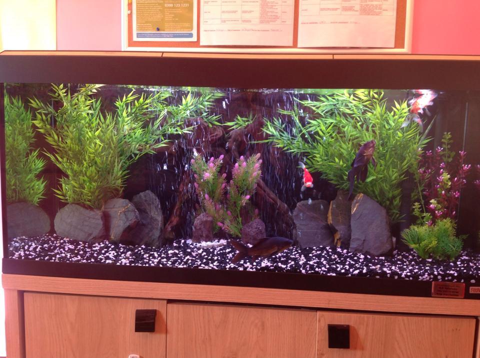 Roma 240 Goldfish Aquarium