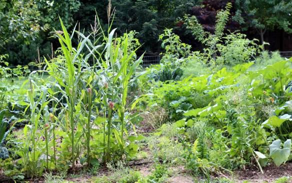 August_Garden
