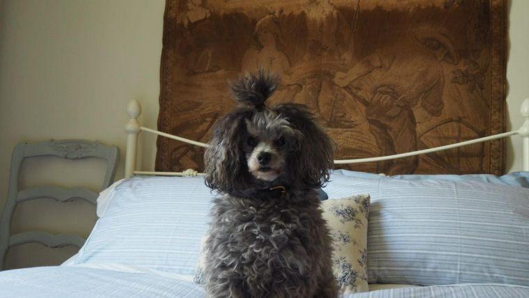 Pet&Owner BnB