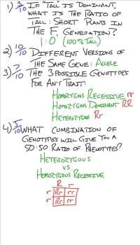 Genetics Worksheet Quizlet - Kidz Activities