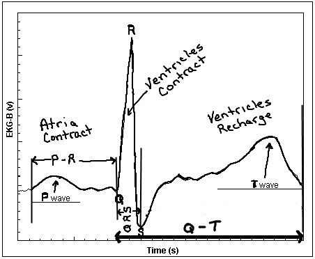 Electrical Ladder Diagram Symbols Chart. Diagram. Auto