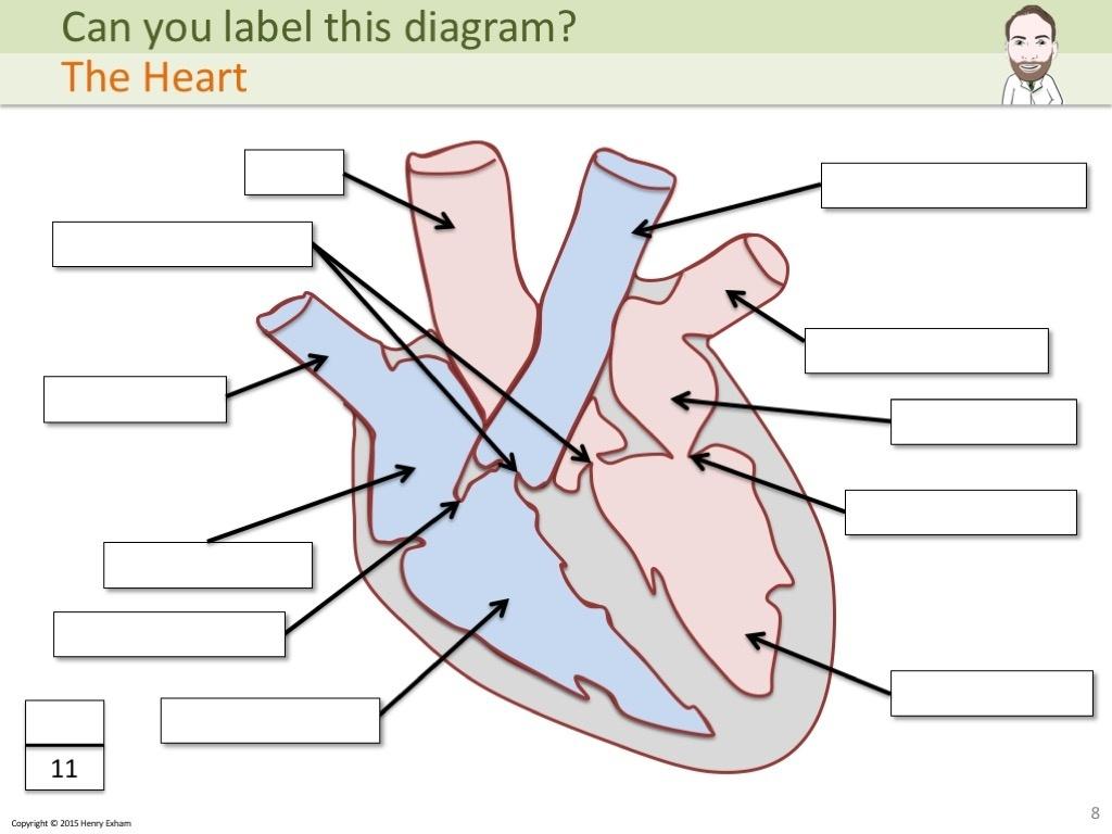 Heart Diagram Label Worksheet