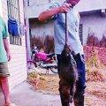 ratto - Cina: catturato ratto da 5 kg! E' il più grande del mondo!