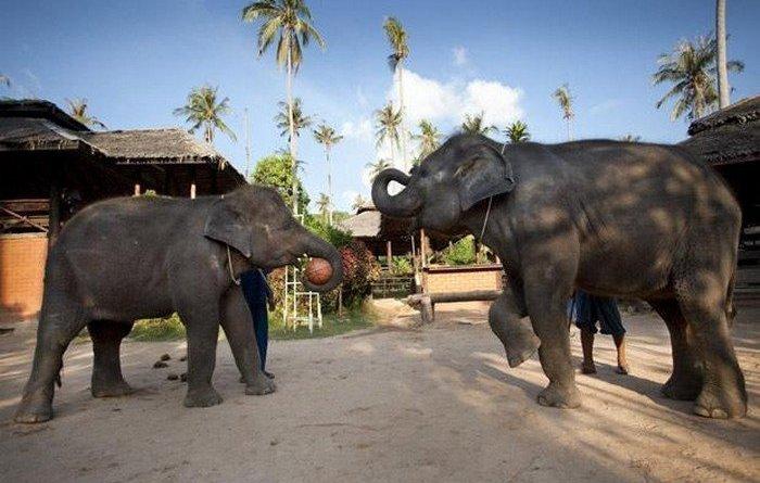 1264454266 elephant basketbal 05 - Elefanti che giocano a basket
