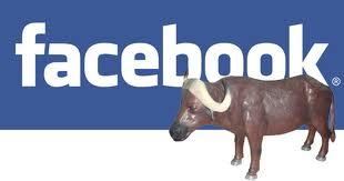 images 9 - Le 10 bufale su facebook diventati virali